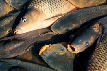 مزارع پرورش ماهی