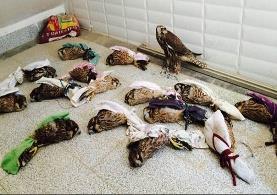 کشف و ضبط محموله بزرگ قاچاق پرندگان