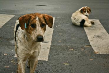 راههای کنترل رشد بیرویه حیوانات شهری