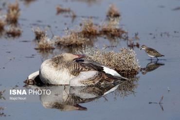 مرگ پرنده