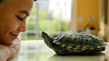 لاک لاکپشت