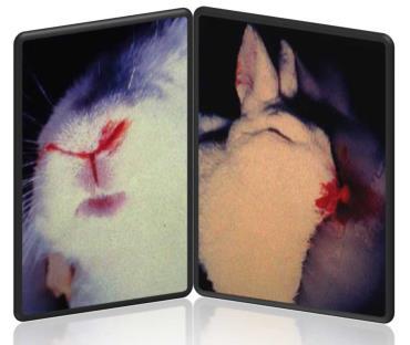 بیماری K5 در خرگوش