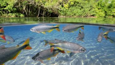 آیا ماهیها هم احساس تشنگی میکنند؟