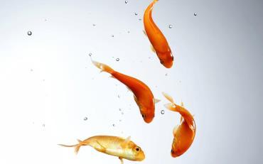تشنگی در ماهی