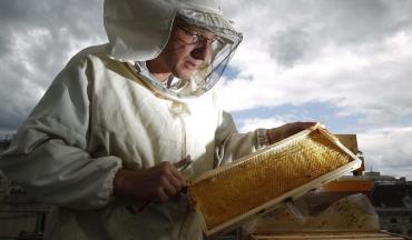 مسمومیت زنبوران عسل توسط آفتکشهای زراعی