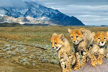 پارک ملی توران