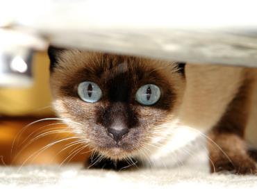بیماری ادراری در گربه