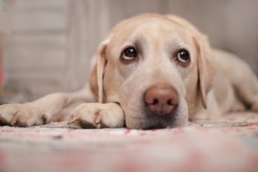 عصبی بودن سگ
