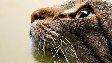 رفتار گربه