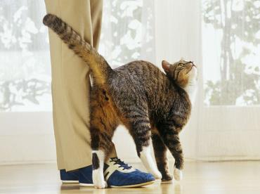 نگهداری گربه