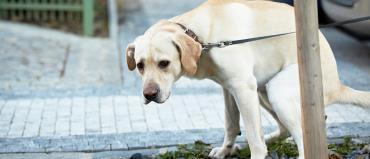 یبوست در سگ