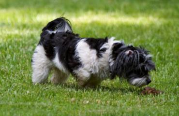 خوردن مدفوع در سگ