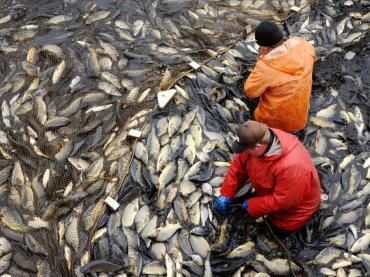 اشتهای ماهیان پرورشی