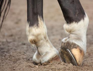 هجومالدمی سم اسب
