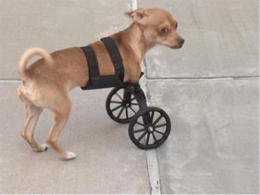 نجات سگ معلول
