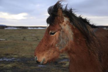 بیماریهای پوستی در اسب
