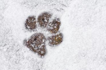 تحمل سگ در سرما