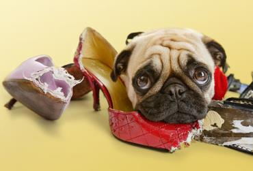 جویدن اشیا توسط سگ
