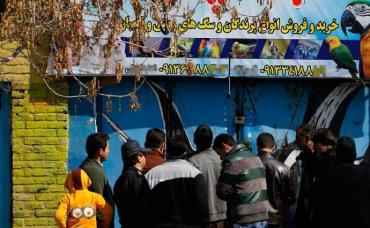 پرنده فروشی های کرمان