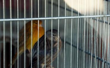 پرنده فروشی