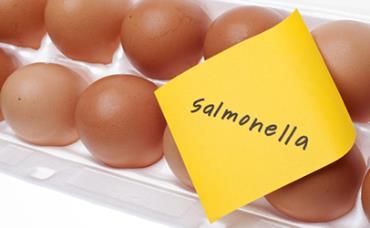 سالمونلا در تخم مرغ