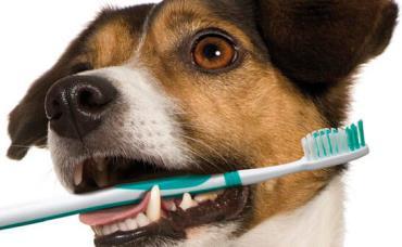 بیماریهای دهان و دندان در سگ