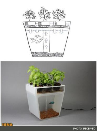 کیت پرورش گیاه و ماهی