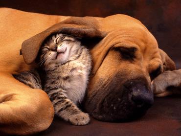 سگ و گربه خانگی