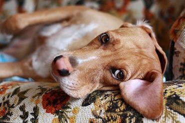 بیماری عصبی در سگ