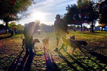 بهبود زندگی اجتماعی با سگ
