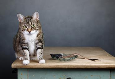 مصرف ماهی خام برای گربه