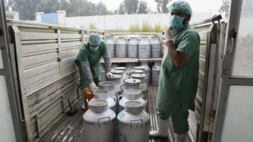 خودکفایی تولید لبنیات در افغانستان