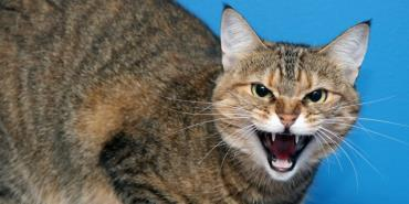 زبان بدن گربه