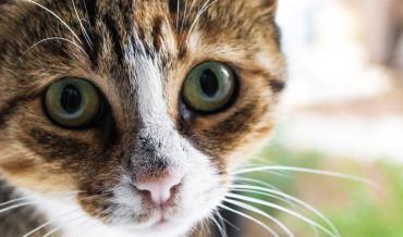 وضعیت چشمان گربه درحالات مختلف