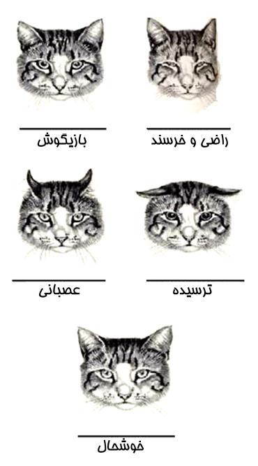 مفهوم وضعیت گوشهای گربه
