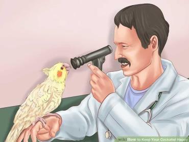 دامپزشک پرنده