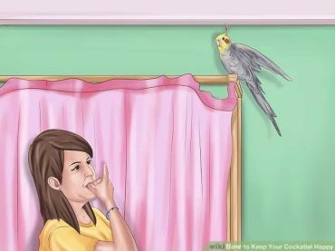 بازی با پرنده