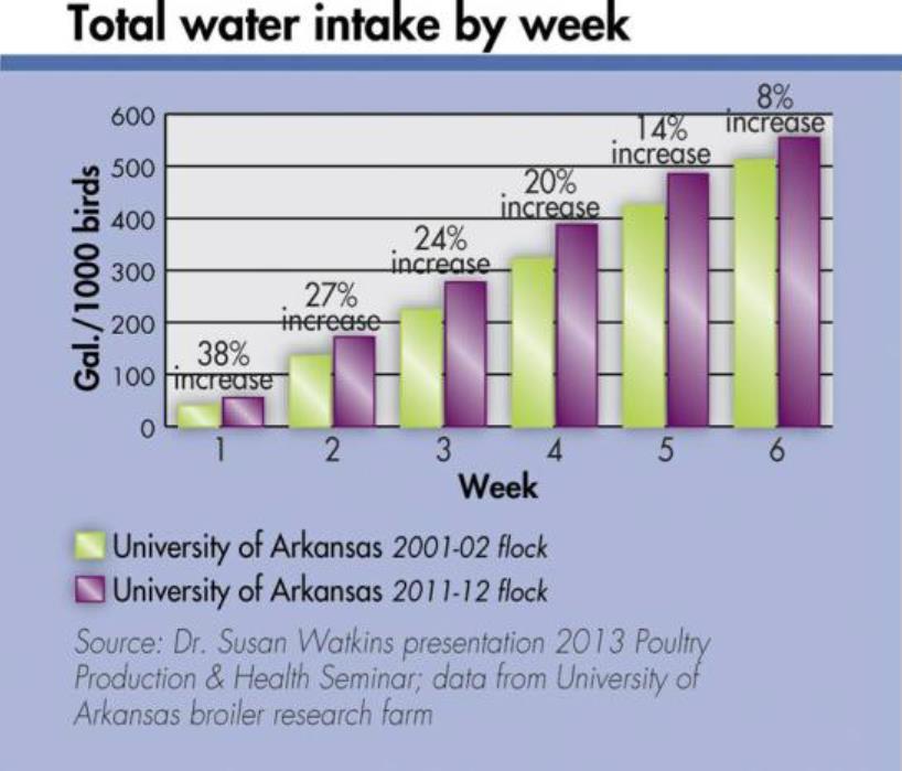 مقدار مصرف آب در جوجه