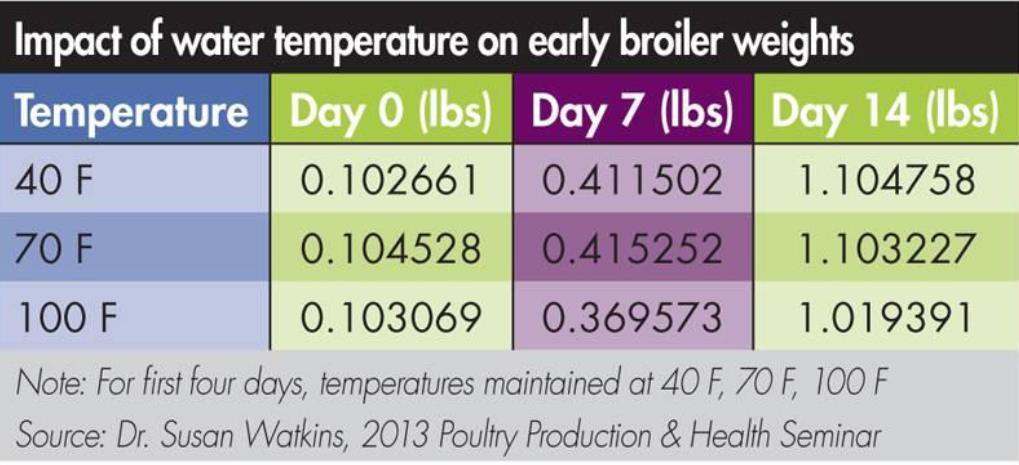 تأثیر دمای آب روی مرغ