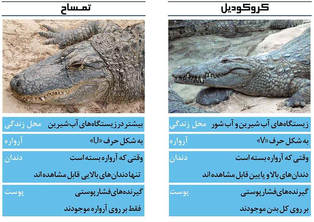فرق بین کروکودیل و تمساح