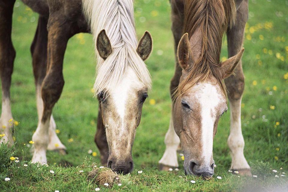 علت های کم اشتهایی در اسب ها
