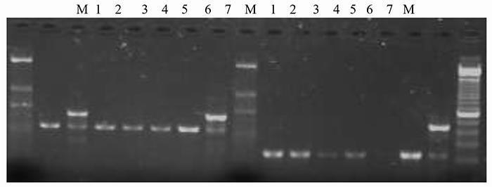ژنوم تک یاخته توکسوپلاسما گوندئی