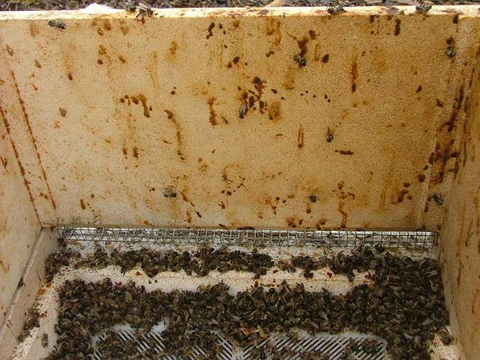 بیماری نوزما در زنبورعسل