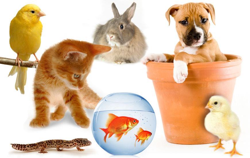 بیماری حیوانات خانگی