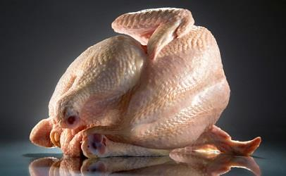 مرغهای آلوده به سالمونلا معدوم شدند
