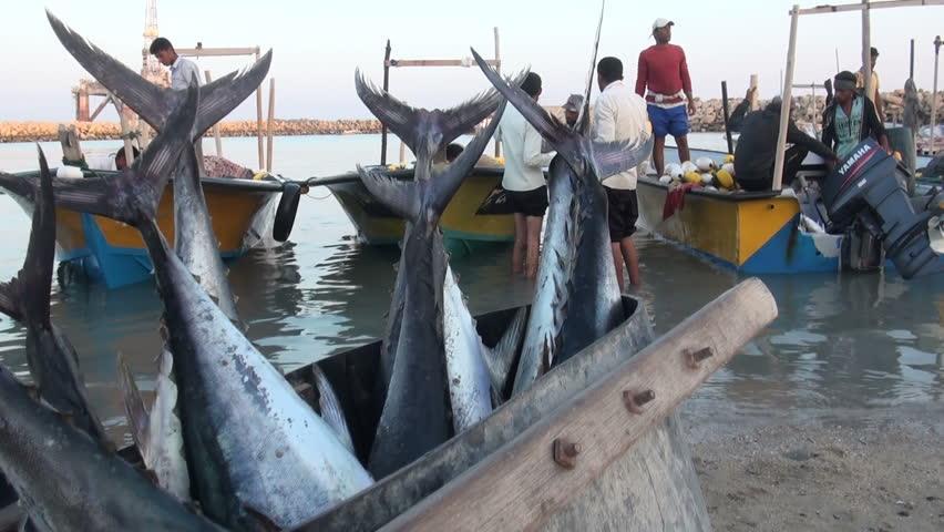 ممنوعیت صید ماهی خلیج فارس