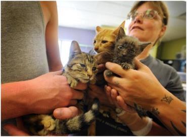 90 گربه در یک خانه