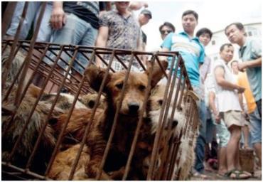 تجارت بیرحمانه گوشت سگ و گربه