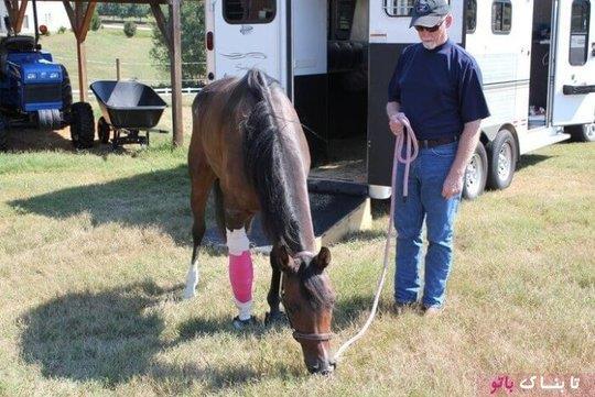 پای شکسته اسب