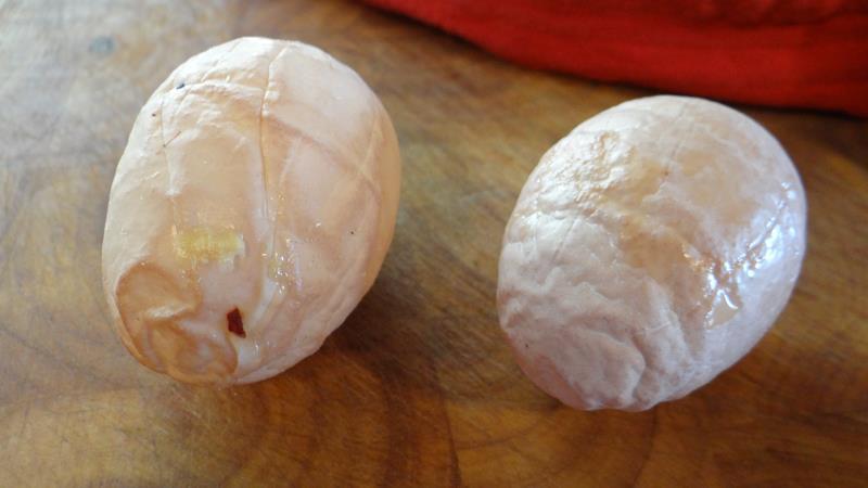 برونشیت عفونی کیفیت تخممرغ